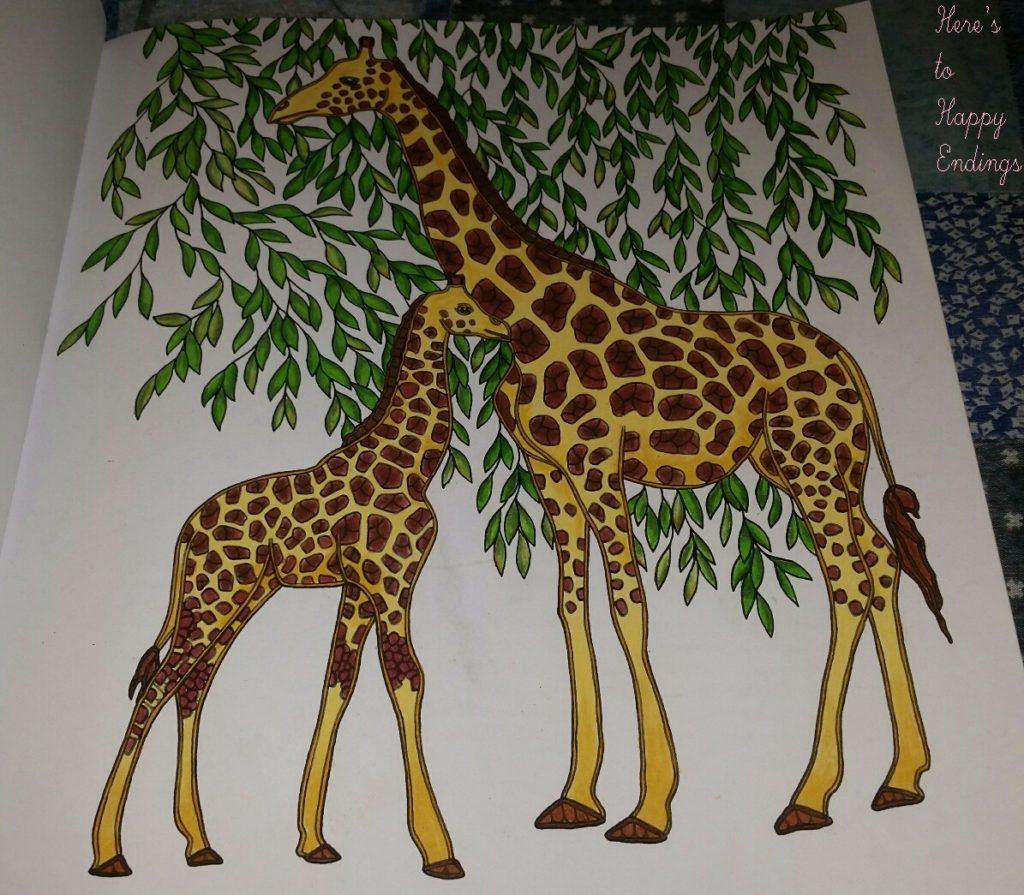 animals giraffes