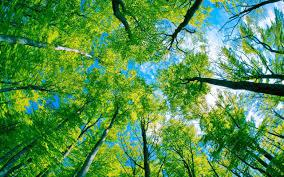 6. trees